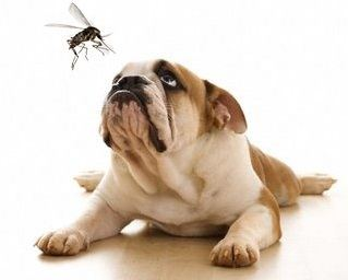 dog looking at mosquito