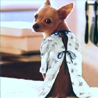 dog wearing surgery gown