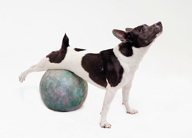 Dog stretching on exercise ball