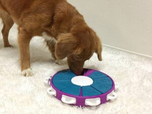 dog playing with food puzzle toy